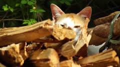 Stray Cat Stock Footage
