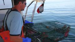Lobsterman Takes Three Lobsters Out of Lobster Trap, Maine Stock Footage
