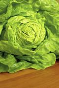 fresh green lettuce - stock photo
