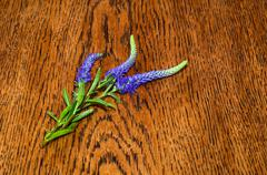 Spiked speedwell on a table Stock Photos