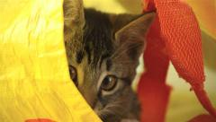 Kitten in bag - close up Stock Footage