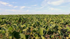 HD Stock Footage - Soy Bean Field, blue Sky, clouds Stock Footage