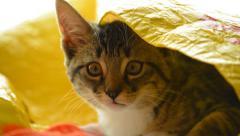 Cute cat in bag Stock Footage