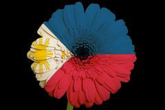 Stock Illustration of gerbera daisy flower in colors  national flag of philippines    on black back