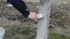 Gardener whitening cherry-fruit tree trunk garden spring work Stock Footage