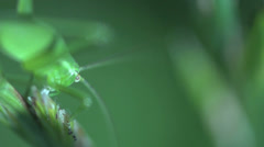 Green bug eating Stock Footage