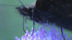 Extreme close up from a butterfly Stock Footage