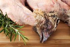 quail and rosemary - stock photo