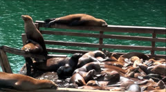 Seals and Sea Lions on Pier In Monterey Bay with Sound Stock Footage