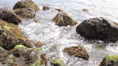 Rocks with Seaweeds and Waves at Low Tide along Oregon Coast Stock Footage