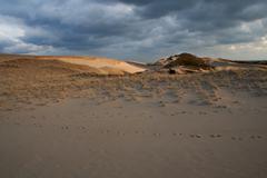 Cape Cod jalanjäljet hiekkadyynien National Rantaan Provincetown Kuvituskuvat