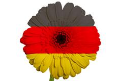 gerbera daisy flower in colors national flag of germany   on white background - stock illustration
