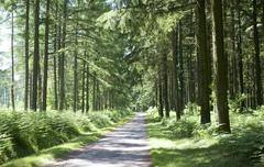 forest in the limousin - stock photo