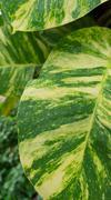 close up leaf - stock photo