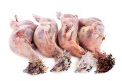 Four quails Stock Photos