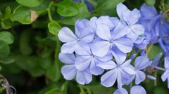 blue flora - stock photo