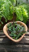 Plant flowerpot Stock Photos