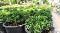 Small green bush tree Stock Photos