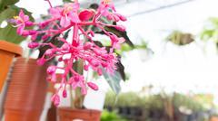 pink flower - stock photo
