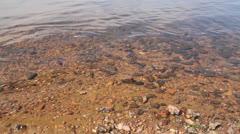 Spawning of a bleak (Alburnus alburnus). little fishes on solar shoal Stock Footage