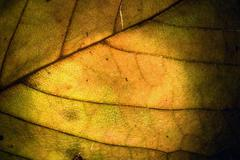Macro close up abstract of a green yellow  leaf Stock Photos
