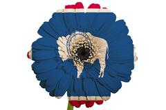 gerbera daisy flower in colors flag of american state of wyoming   on white b - stock illustration