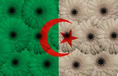 stylized  national flag of algeria    with gerbera flowers - stock illustration