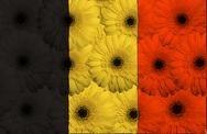 Stock Illustration of stylized  national flag of belgium    with gerbera flowers