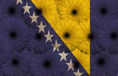 Stock Illustration of stylized  national flag of bosnia herzegovina    with gerbera flowers