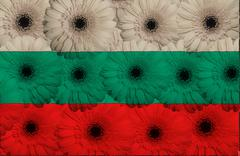 Stock Illustration of stylized  national flag of bulgaria    with gerbera flowers