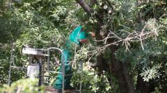 Tree Surgeon Cuts Storm Broken Tree Branches Stock Footage
