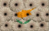 Stock Illustration of stylized  national flag of cyprus    with gerbera flowers