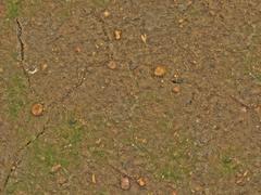 Seamless texture of wet ground Stock Photos