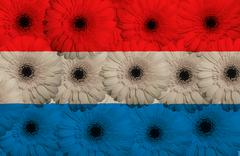 stylized  national flag of holland    with gerbera flowers - stock illustration
