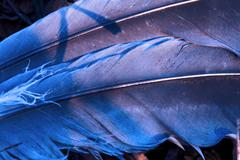 crow plumage blue and abstract - stock photo