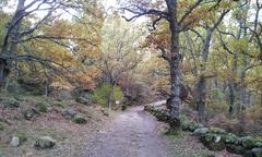 winter spain forest - stock photo