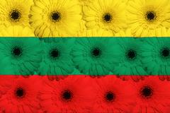 stylized  national flag of lithuania    with gerbera flowers - stock illustration