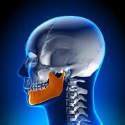 Brain Anatomy - Mandible - stock photo