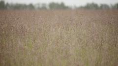 Peaceful field 2 Stock Footage