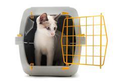 kitten in pet carrier - stock photo