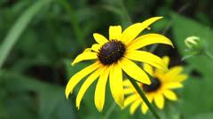 Wildflower 20 Stock Footage
