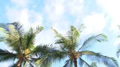 Lanai Palm Tree Pan Stock Footage