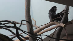 A monkey in a zoo Stock Footage
