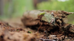 Follow focus from the rotten branch to the tree Stock Footage