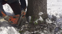 SLOW MOTION: Forester cutting down a tree - stock footage