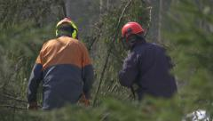 Foresters working in forest Stock Footage