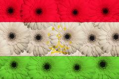 Stock Illustration of stylized  national flag of tajikistan    with gerbera flowers