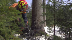 Forester cutting down a tree - stock footage