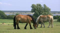 Beautiful Hiddensee Island - Baltic Sea, Northern Germany Stock Footage