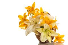 yellow lily - stock photo